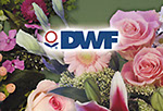 DWF corporate identity program